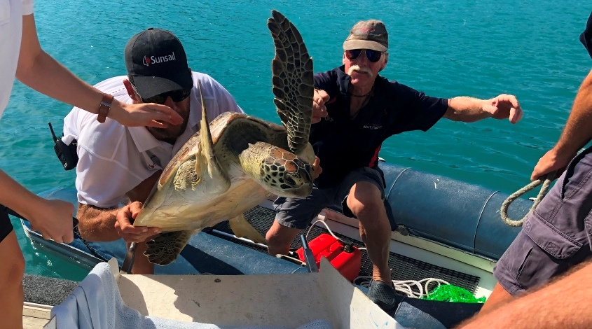 Whitsunday Sea Turtles