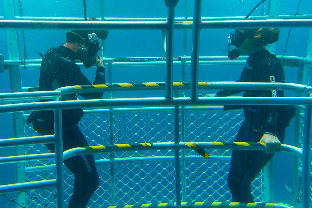 Australia Bucket List Cage Dive Sharks