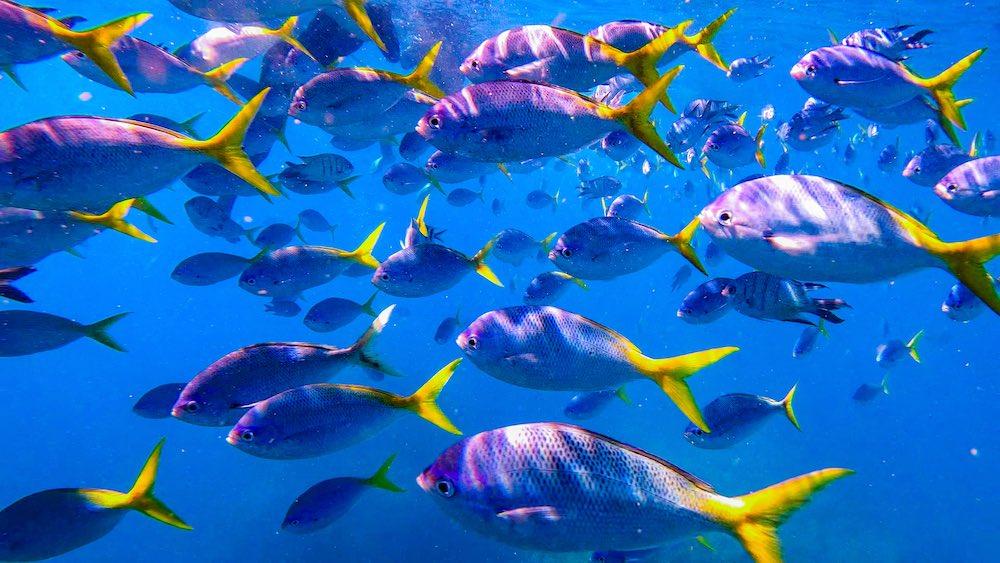 Marine life Whitsundays Ecotourism