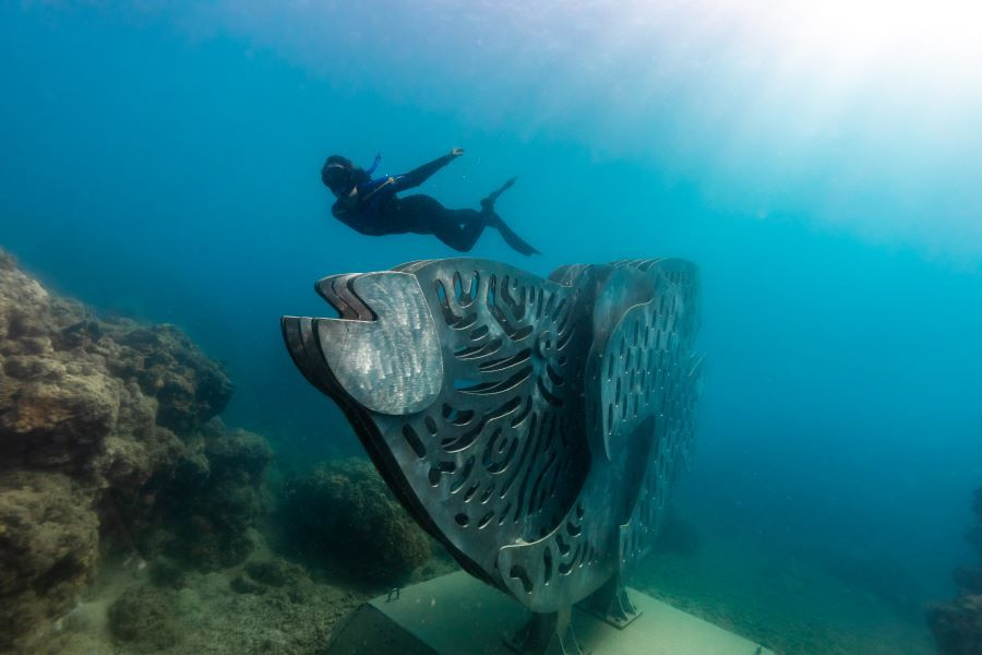 Maori Wrasse - Whitsundays Underwater Sculpture